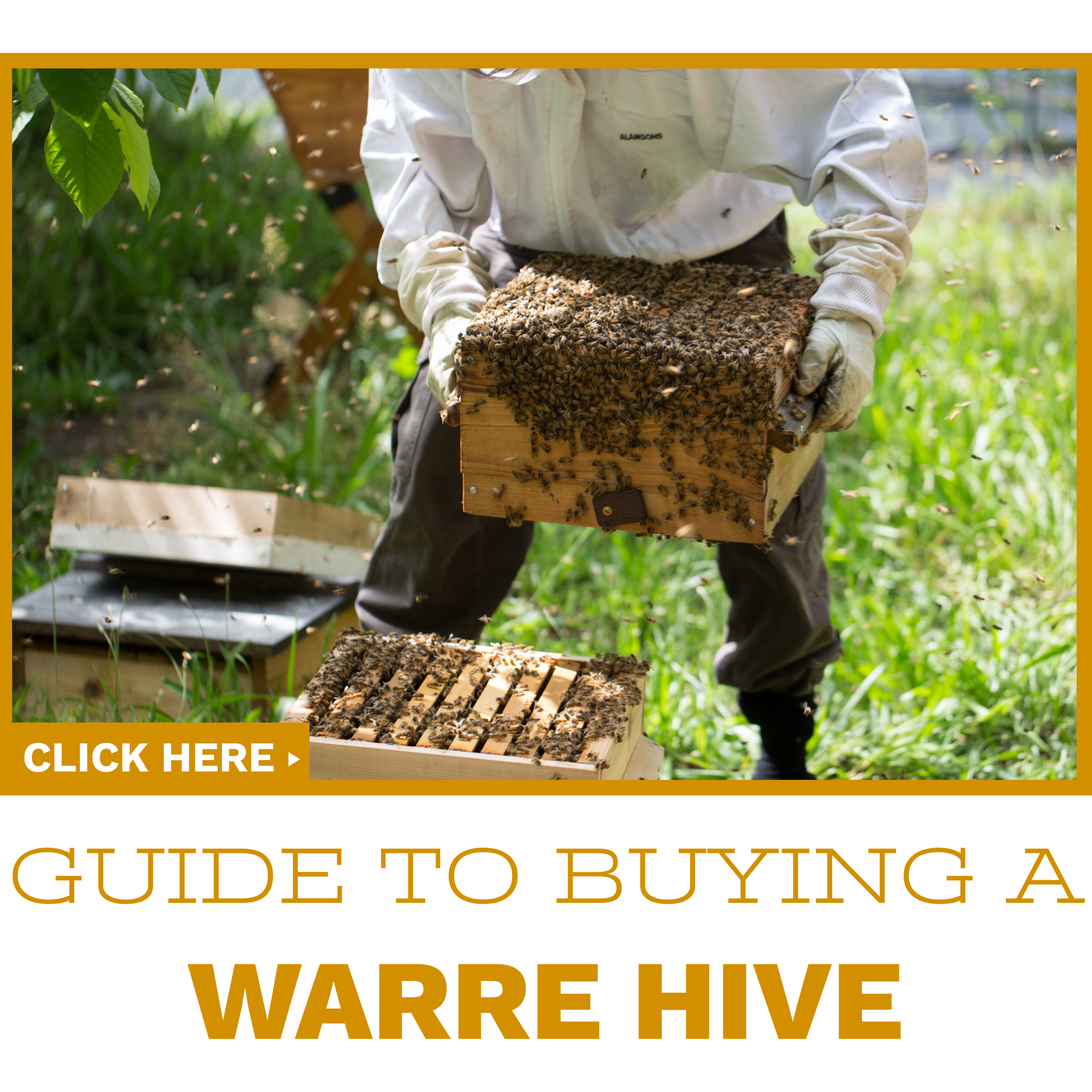 Click to read our guide on buying your first Warre hive.