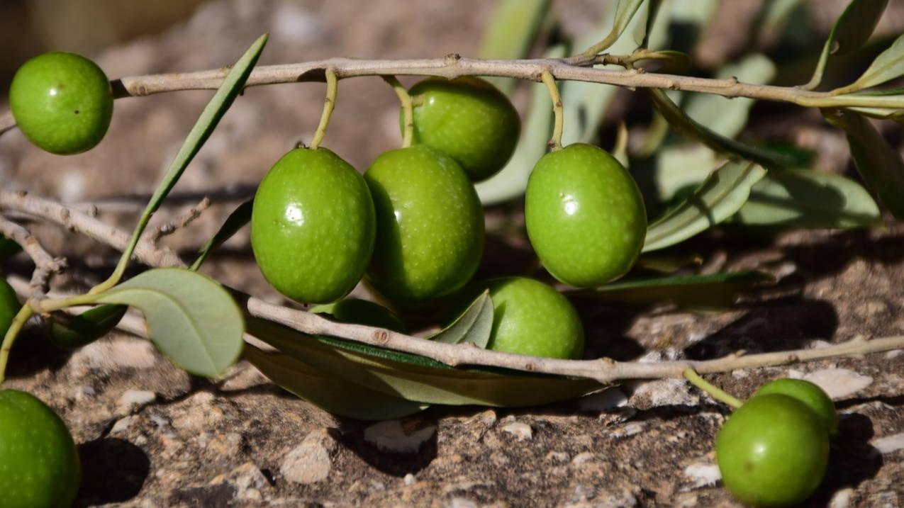 green olives keto