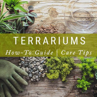 Terrarium How-To Guide | Care Tips