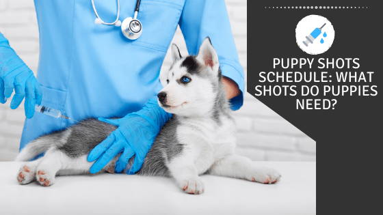 Puppy Shots Schedule: What Shots Do Puppies Need?