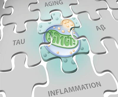 Mitochondrial housekeeping alzheimer's