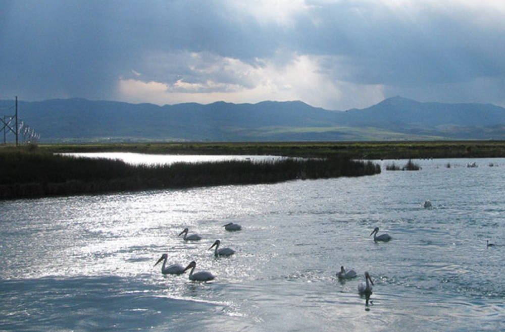 Bear Lake Bird Refuge on the Byway