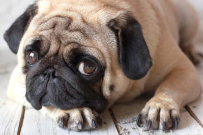5 Reasons You Shouldn't Yell At Your Dog - Team K9