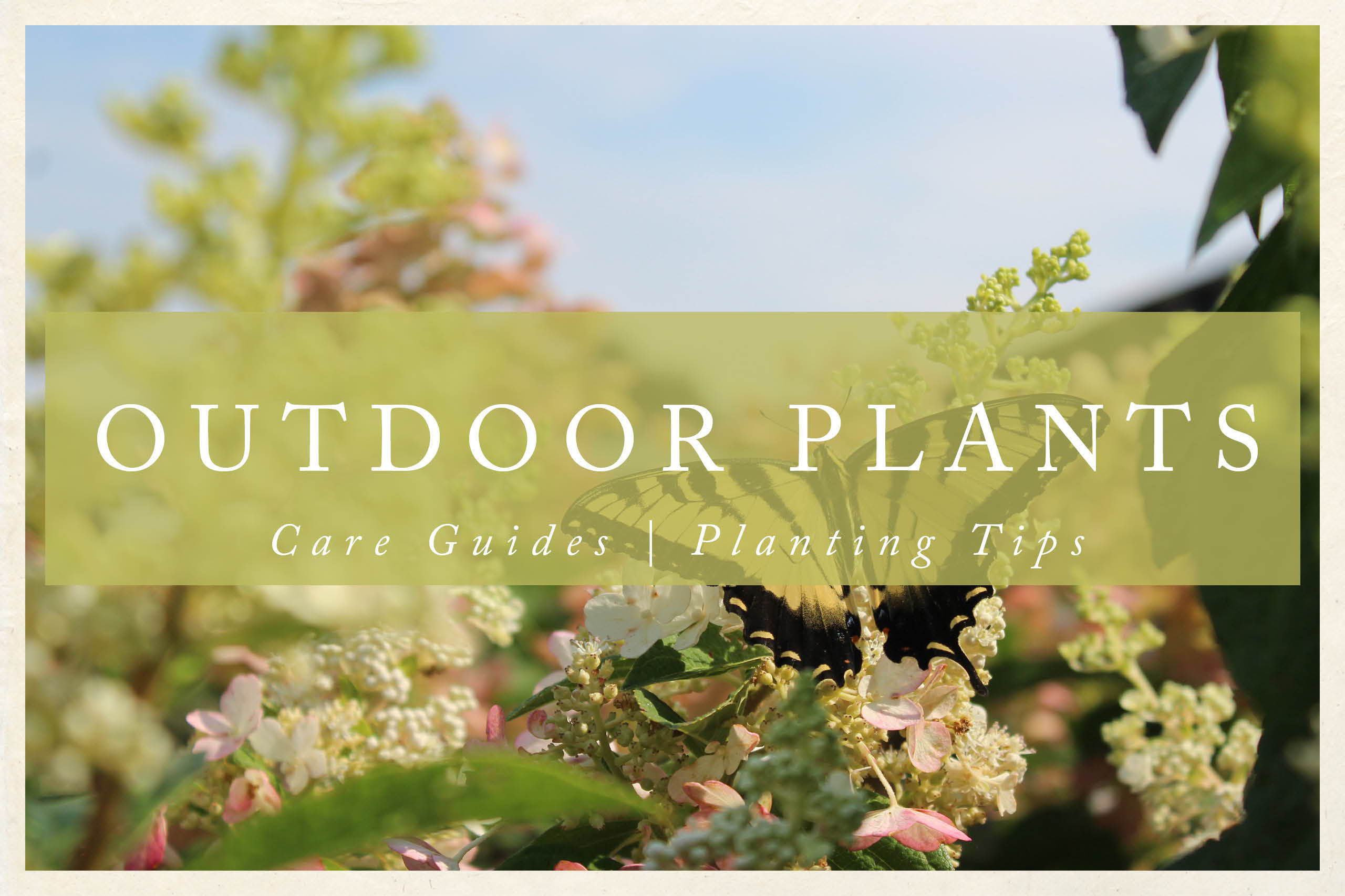 Outdoor Plant Care Guides | Outdoor Planting Tips
