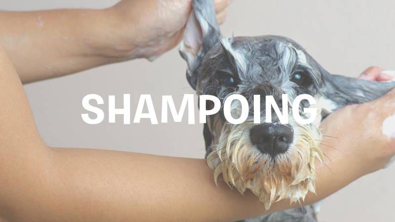 inooko-shampoing-naturel-bio-pour-chien