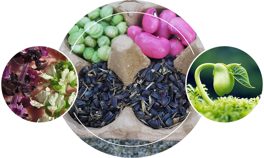 Different kinds of plant seeds