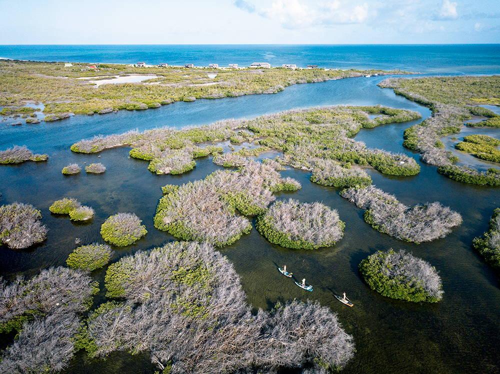 Paddleboarding through mangroves in in Barbuda