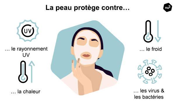 La peau nous protège conte les influences extérieures nocives