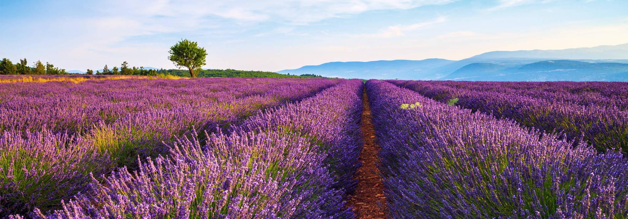 Vous offrir le meilleur de la Provence