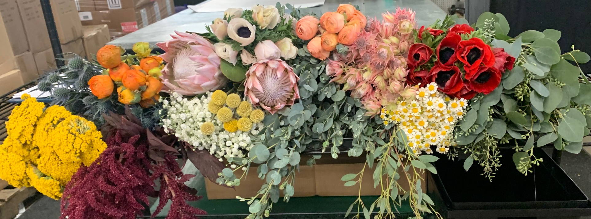 Billy Balls, king protea, white and red anemones, eucalyptus, yarrow, orange ranunculus, hanging burgundy amaranthus, feverfew