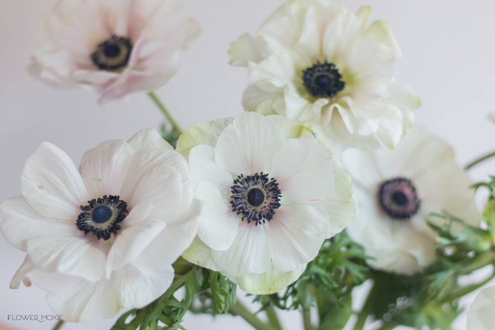 White and Navy Anemone Flower