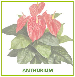 ARTIFICIAL ANTHURIUM PLANTS