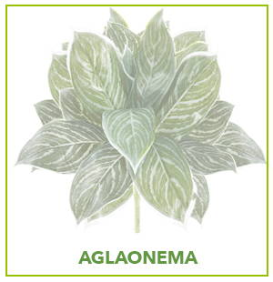 ARTIFICIAL AGLAONEMA PLANTS