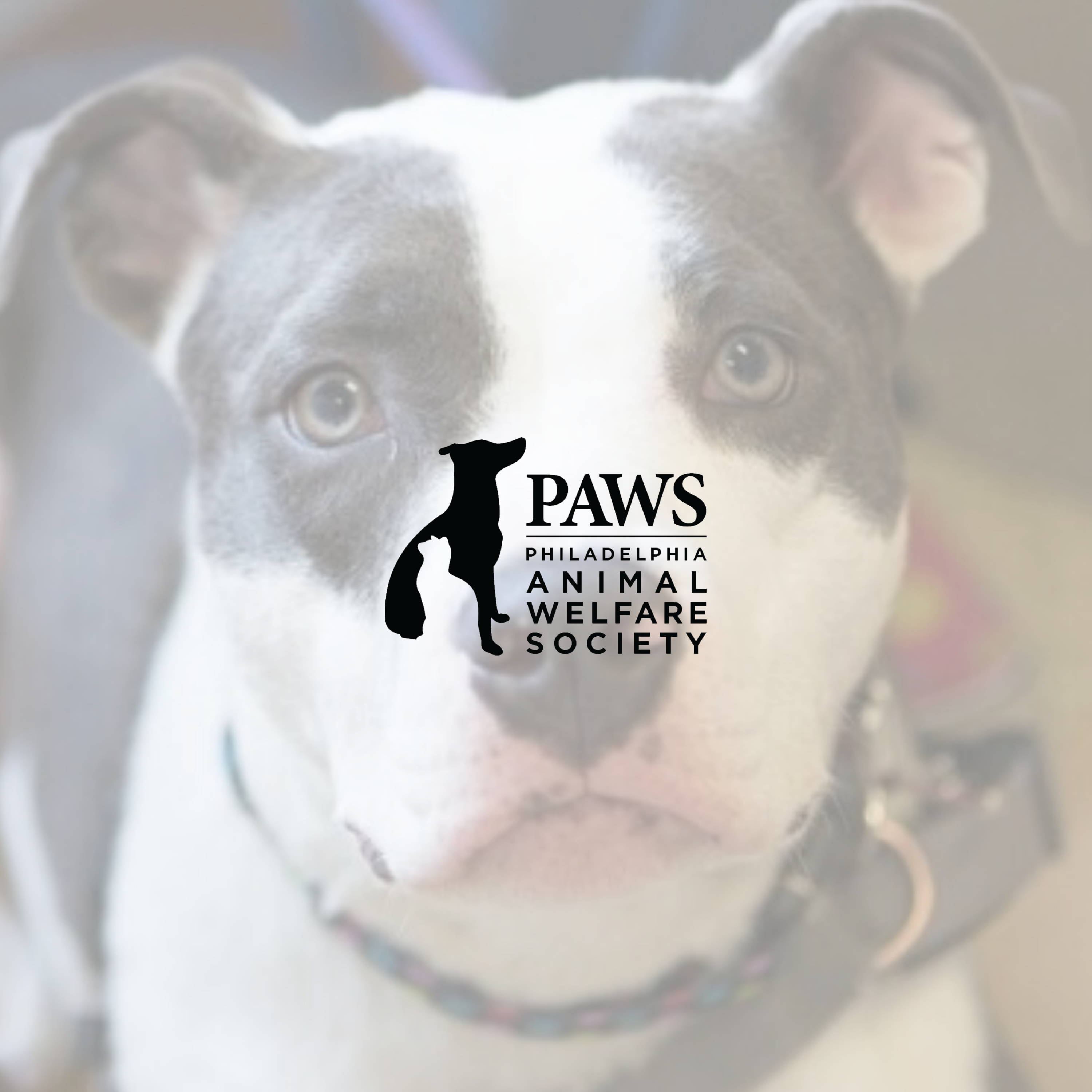 philly paws