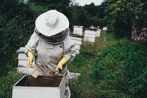 Bienenretter e.V.