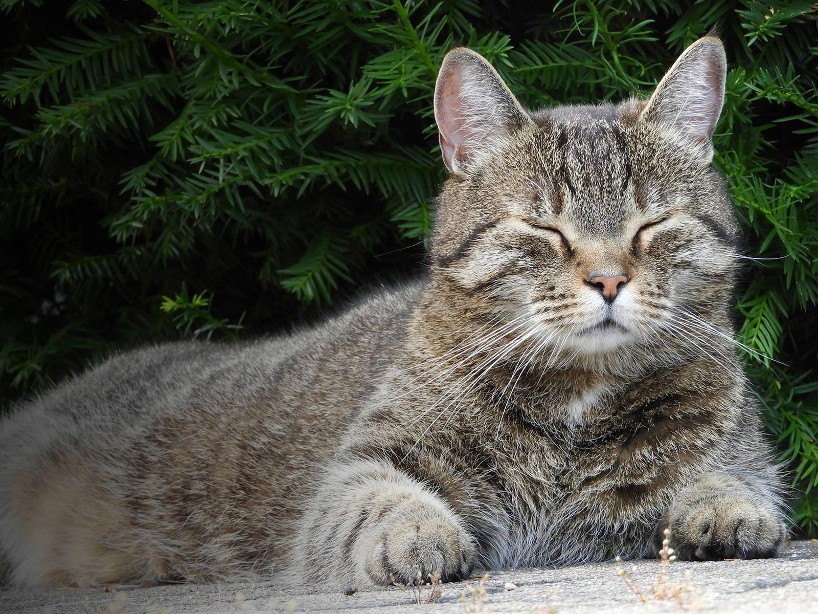 Müde Katze schläft viel - Titelbild