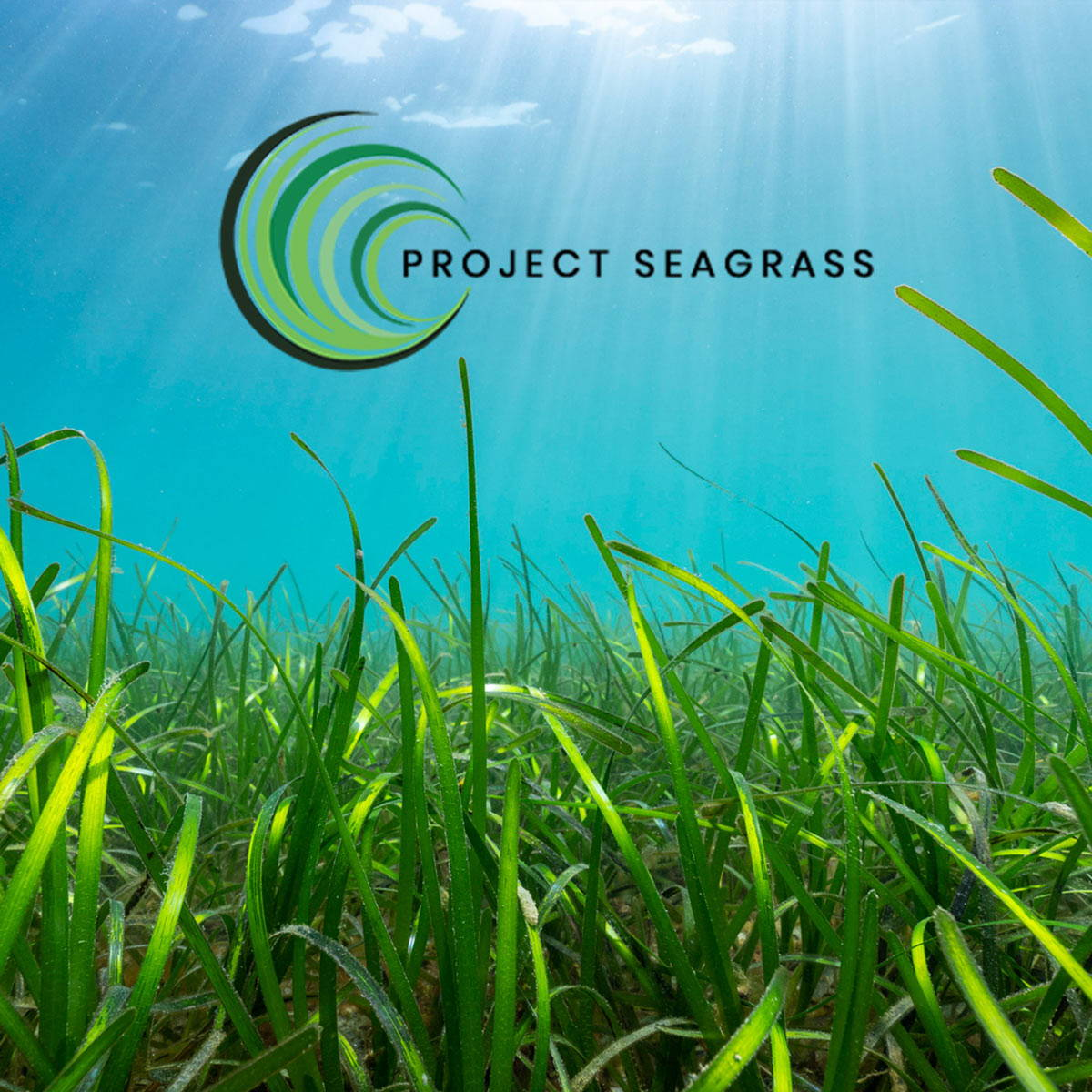 feel-good-drinks-join-forces-with-project-seagrass