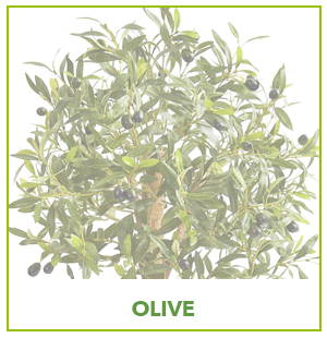 ARTIFICIAL OLIVE PLANTS
