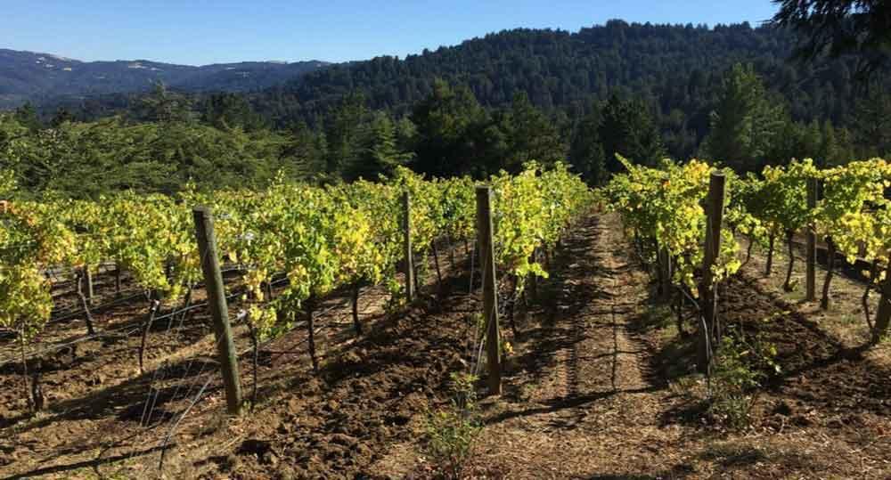 Maison Areion vineyard in the Santa Cruz appellation.