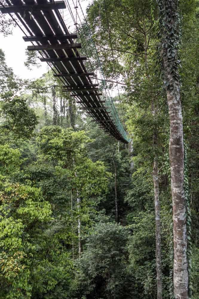 Travelbay Borneo Tours - Customer Reviews - Simon Collard - Danum Valley - Canopy walkway
