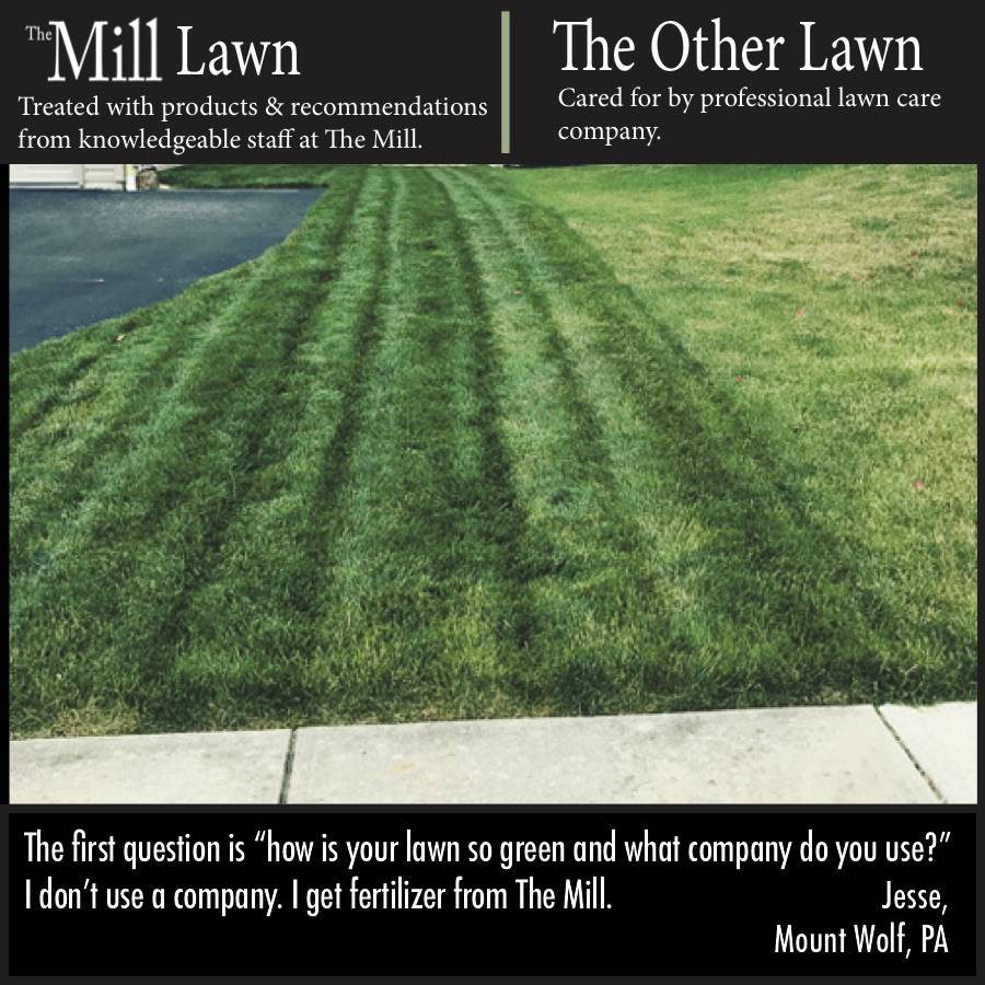 Lawn The Mill Bel Air Black Horse