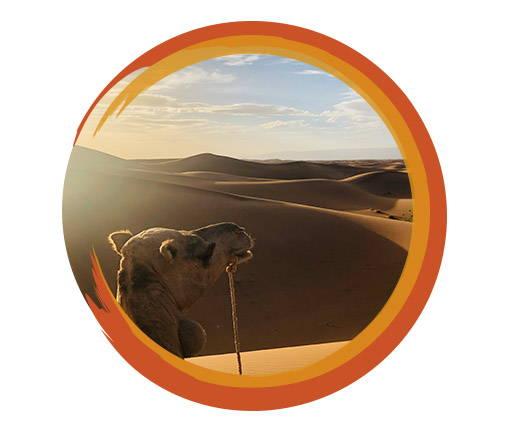 Travelbay Morocco Tours