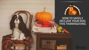 How To safely Include Your Dog this thanksgiving