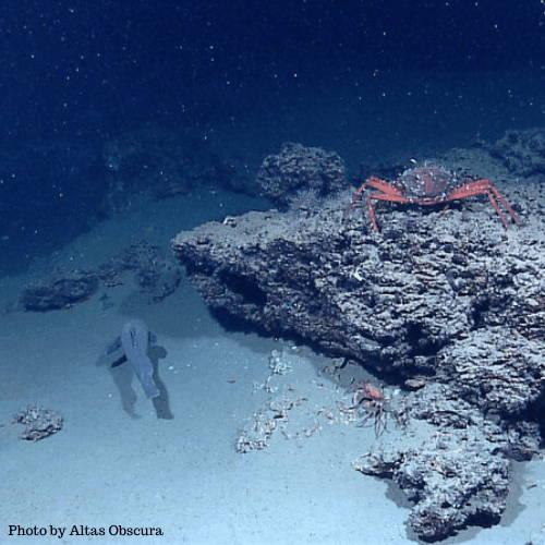 Underwater Marine Snow