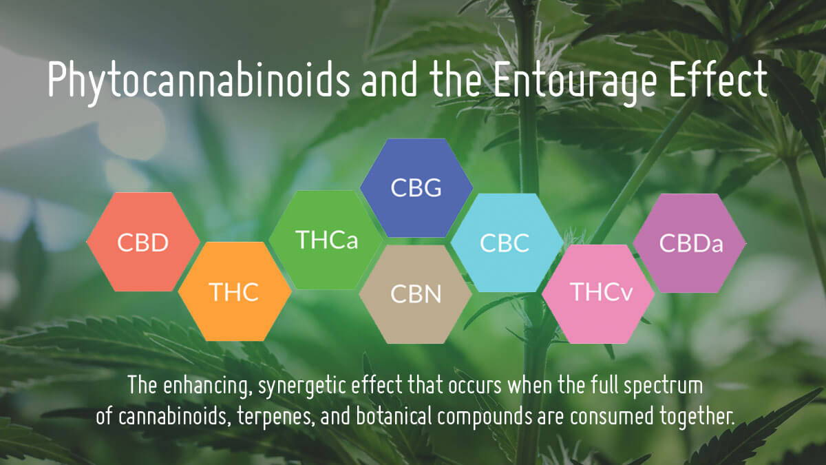 Phytocannabinoids CBD and the Entourage Effect