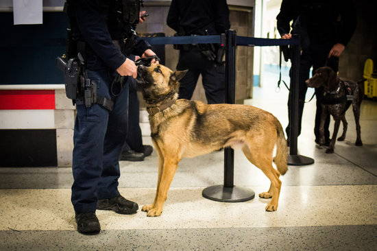 A police dog is wrangled by its handler as another officer walks another police dog in the background