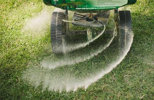 When to Apply Lawn Fertilizer for Established Lawns