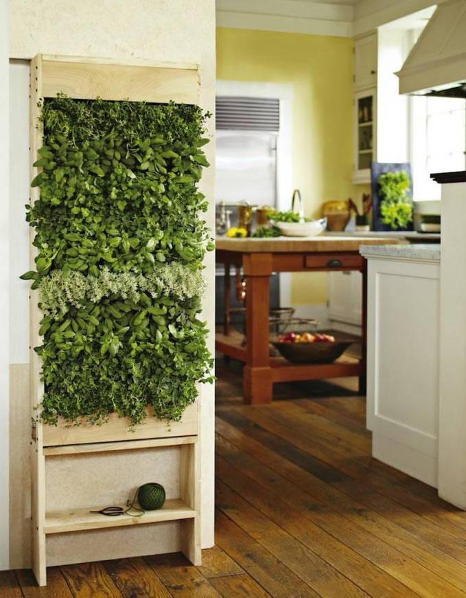 Des plantes grasses sur le mur