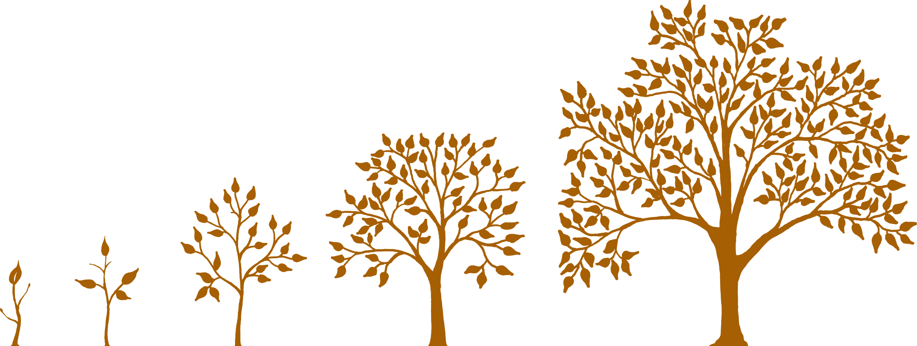 graphic of 5 trees growing from seedling to large tree