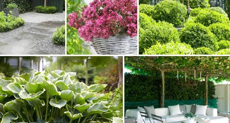 Le jardin qui n'a pas besoin d'entretien