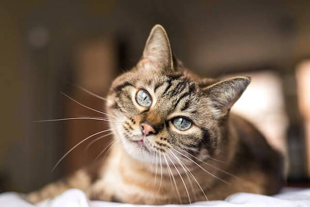 Cat Diarrhea: What You Need to Know