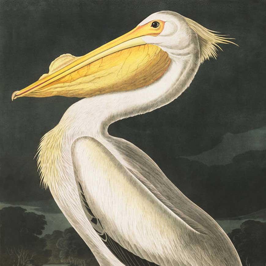 John James Audubon Art