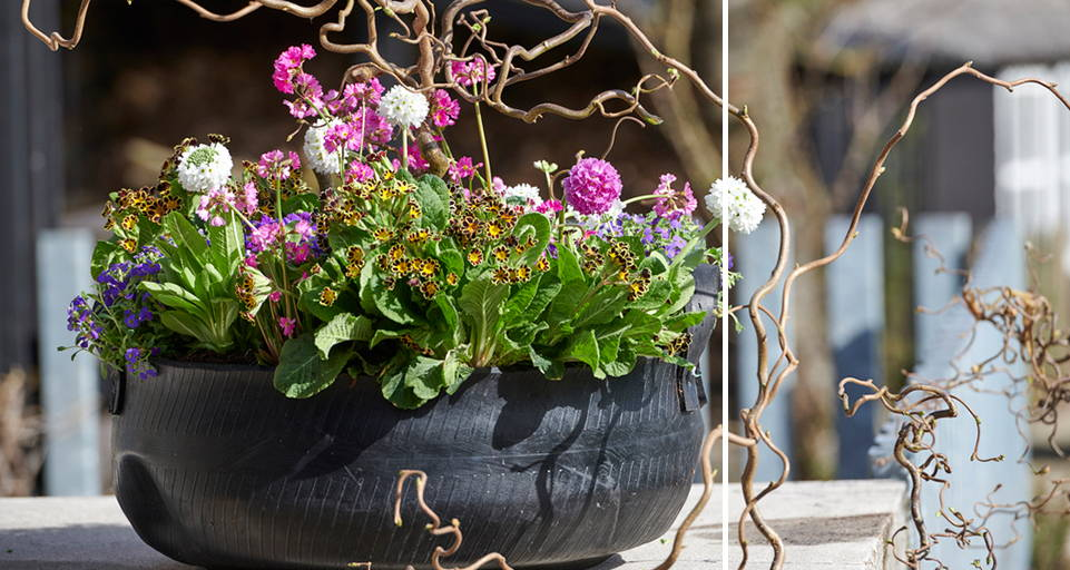 Garden plant: Spring Surprises