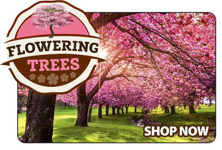Shop Flowering Trees