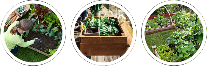 A garden with raised bed planters