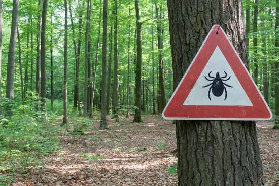 A forest with on tree that has a caution sign warning walkers about ticks.