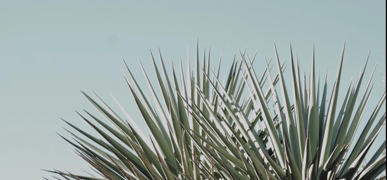 Green plant against light blue sky
