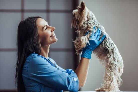 A woman with dark brown hair wearing blue shirt and blue gloves is holding up a Yorkshire terrier