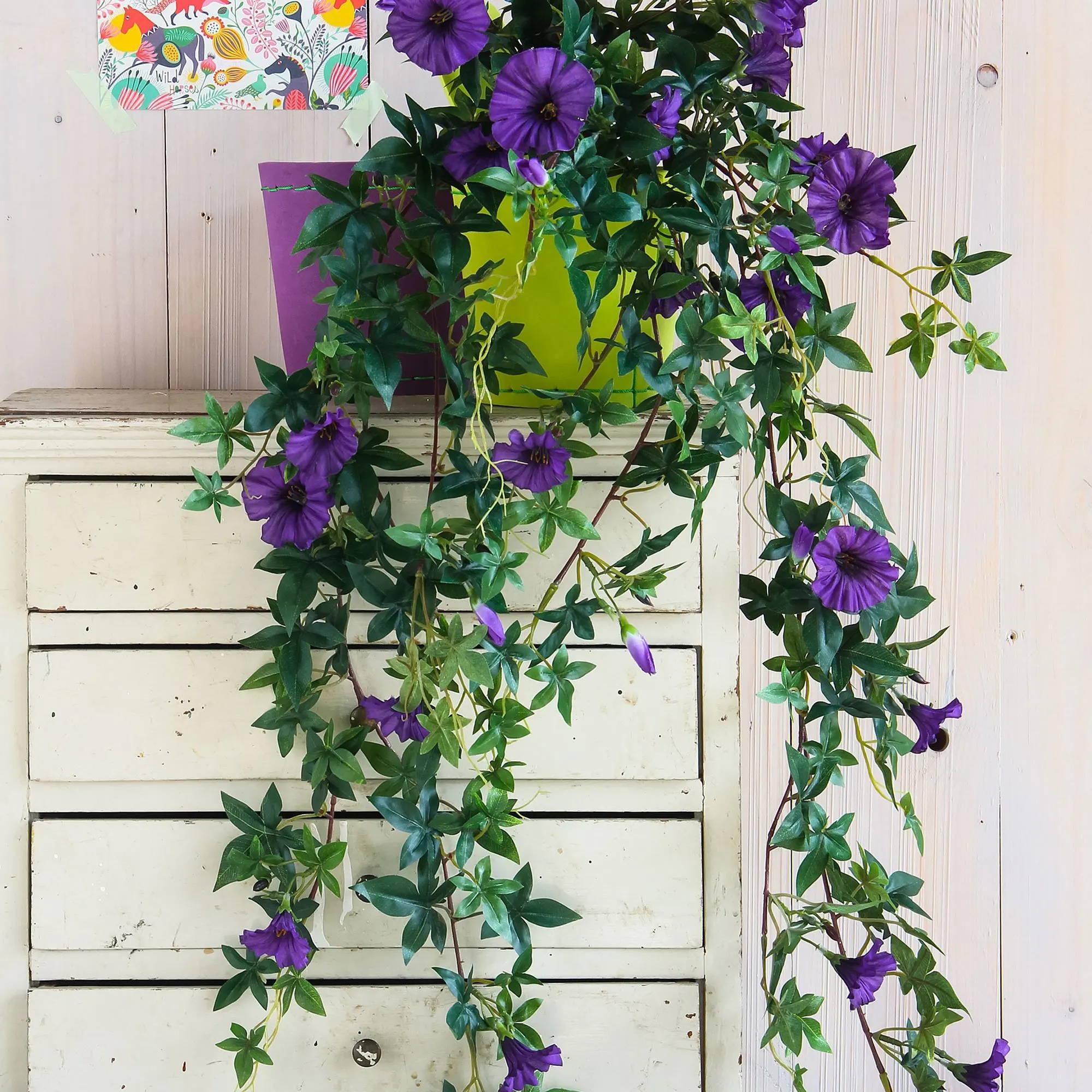 Mica® Petunie Hängepflanze