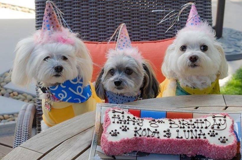 Tasty Dog Birthday Cake