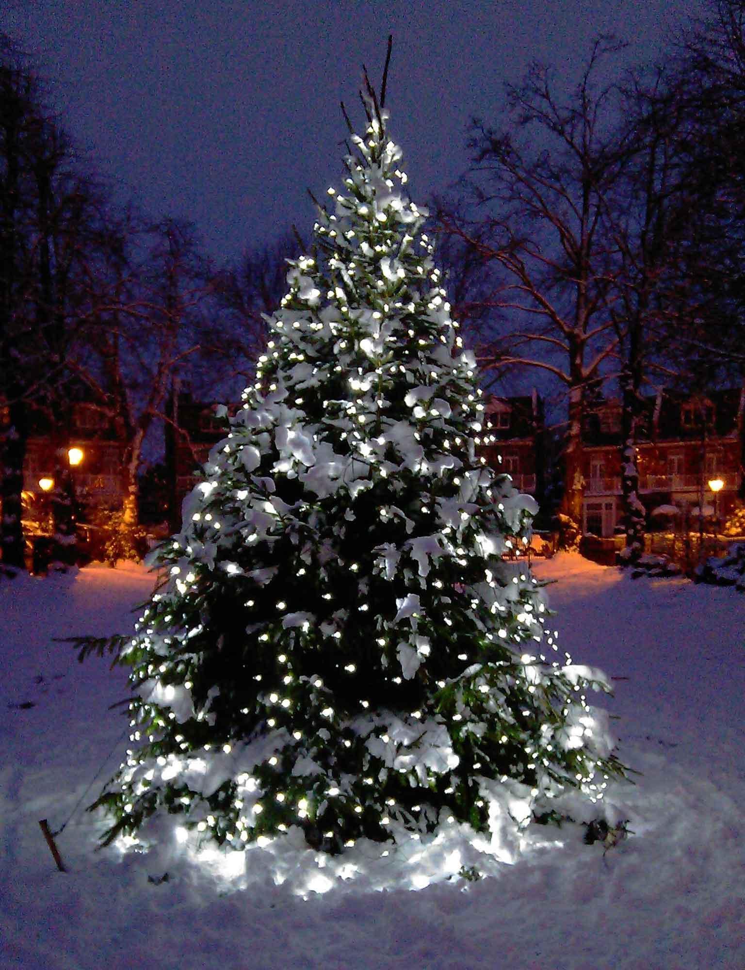 White Christmas Tree With Lights.Christmas Tree Light Ideas Lights4fun Co Uk