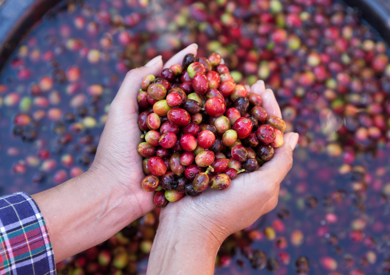 Rohkaffeeextrakt in Norwegen