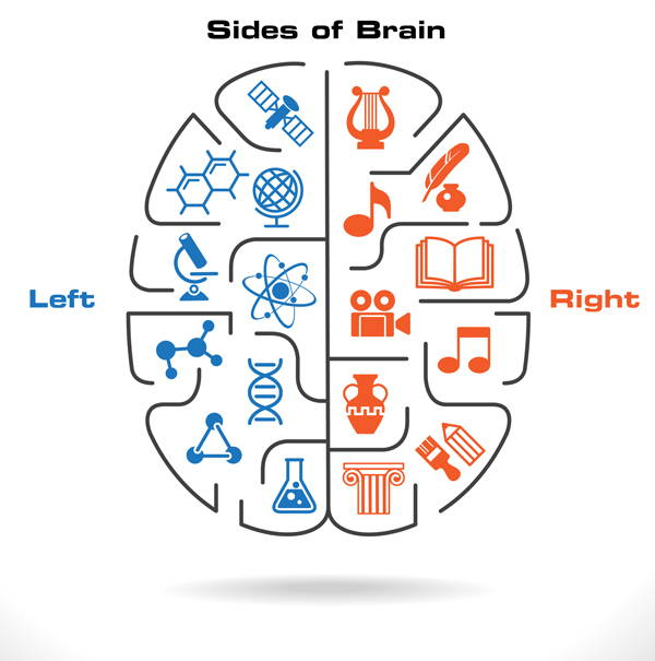 sides of brain