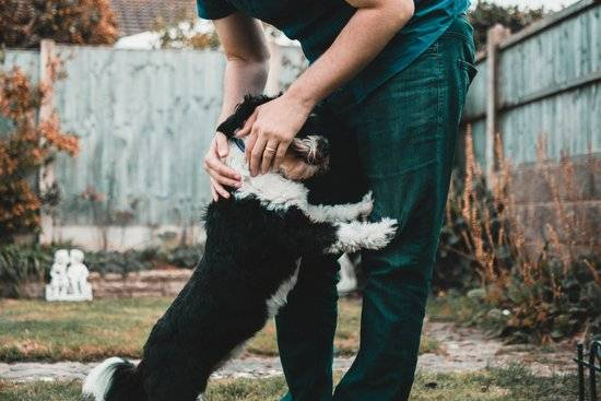 A man petting his black and white dog outside in the yard.