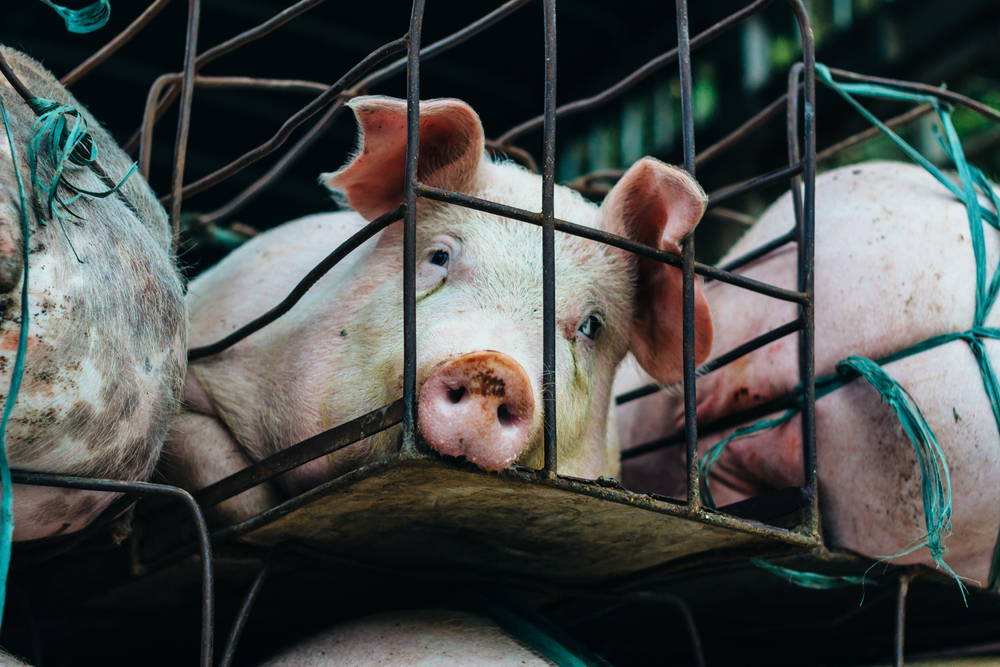 veganism-for-the-animals