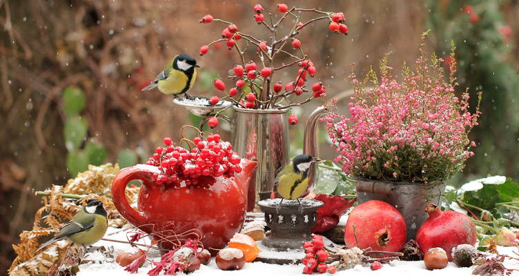 Fai da te: Crea un'atmosfera natalizia in giardino